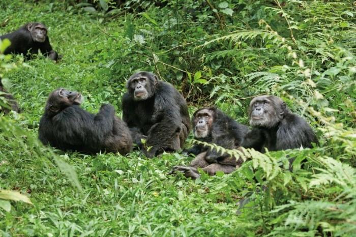Schimpansen 2012 Szenenbild