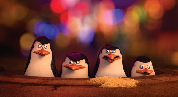 pinguine_2