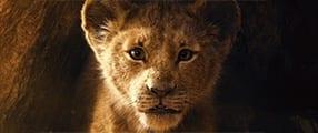 Der König der Löwen