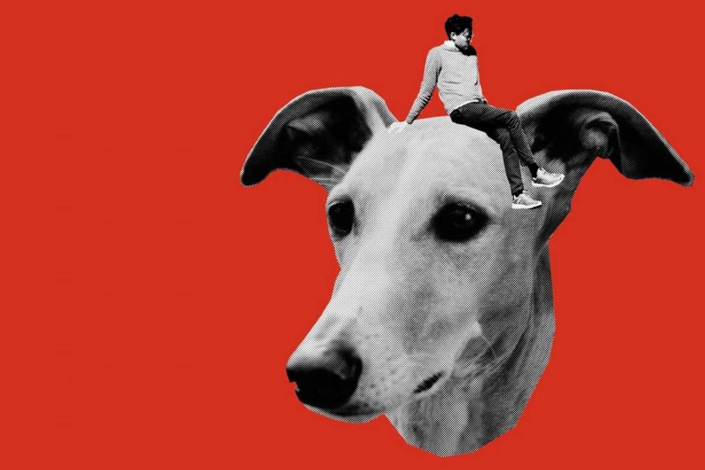 Selbstkritik eines bürgerlichen Hundes